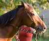 Horses-23