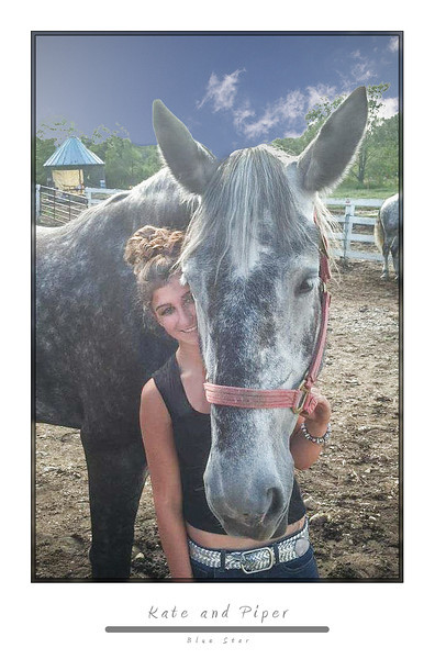 Piper<br /> Percheron mare