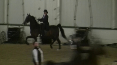 Laura riding Heist. Class 19, ASB 3-Gaited Show Pleasure, Novice Rider.