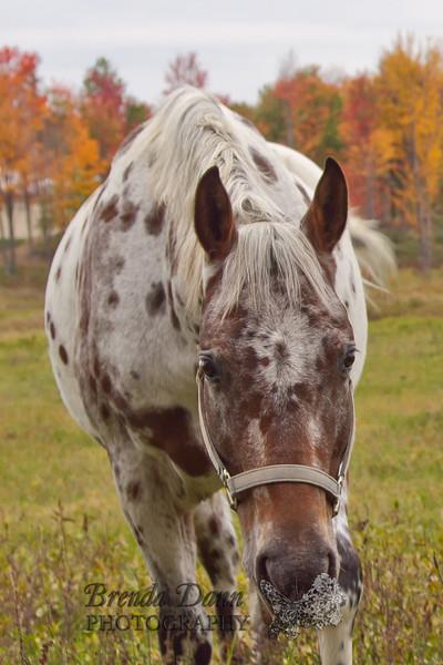 10-12-2011-Horses-0914