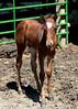 Dakota, one month old.<br /> June 14, 2008