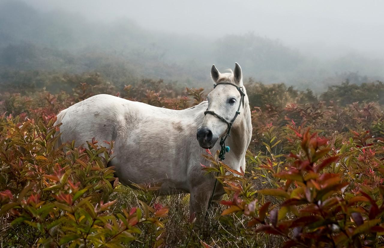 Island horse in the fog.