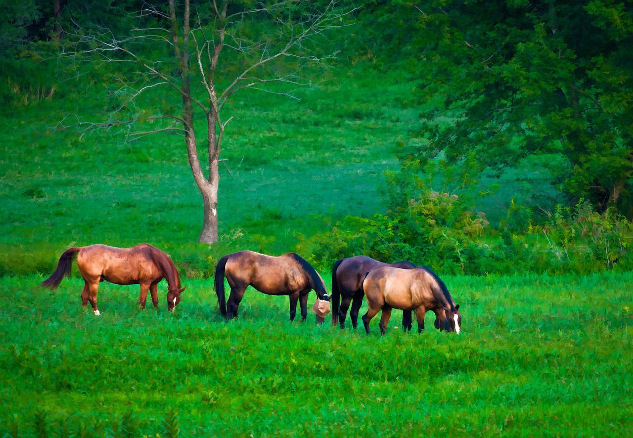 Horse Herd  08 23 11  026 - Edit