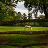 Went to Williamsburg to watch Isabella's tennis lesson on court at Williamsburg Inn, then had dinner with Carol & Isabella at Dudley's Bistro in New Town; White horse in pasture on Francis St, E of Public Hospital & DeWitt Wallace Museum
