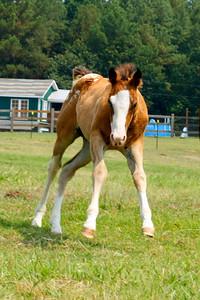 US Equine Rescue League:  June 26