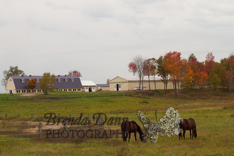 10-12-2011-Horses-0942