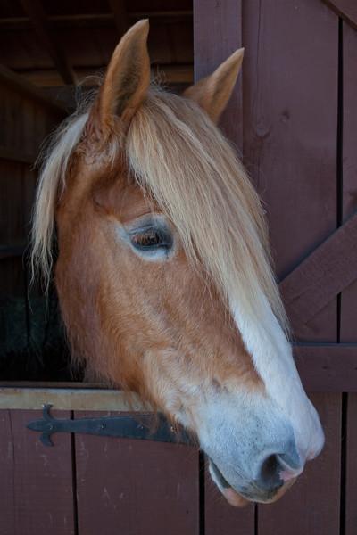 Brown Horse Tan Barn (1 of 1)