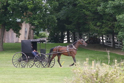 An Amish Horse and Buggy traveling on a road