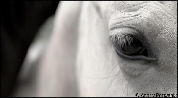 Horses11.jpg