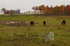 10-12-2011-Horses-0943