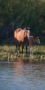 Mama horse and foal all alone in the water.