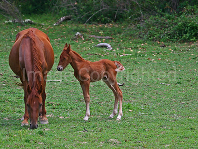 Mare and colt - 5/5/13