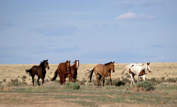 May 19, 2005 Chico Basin Ranch