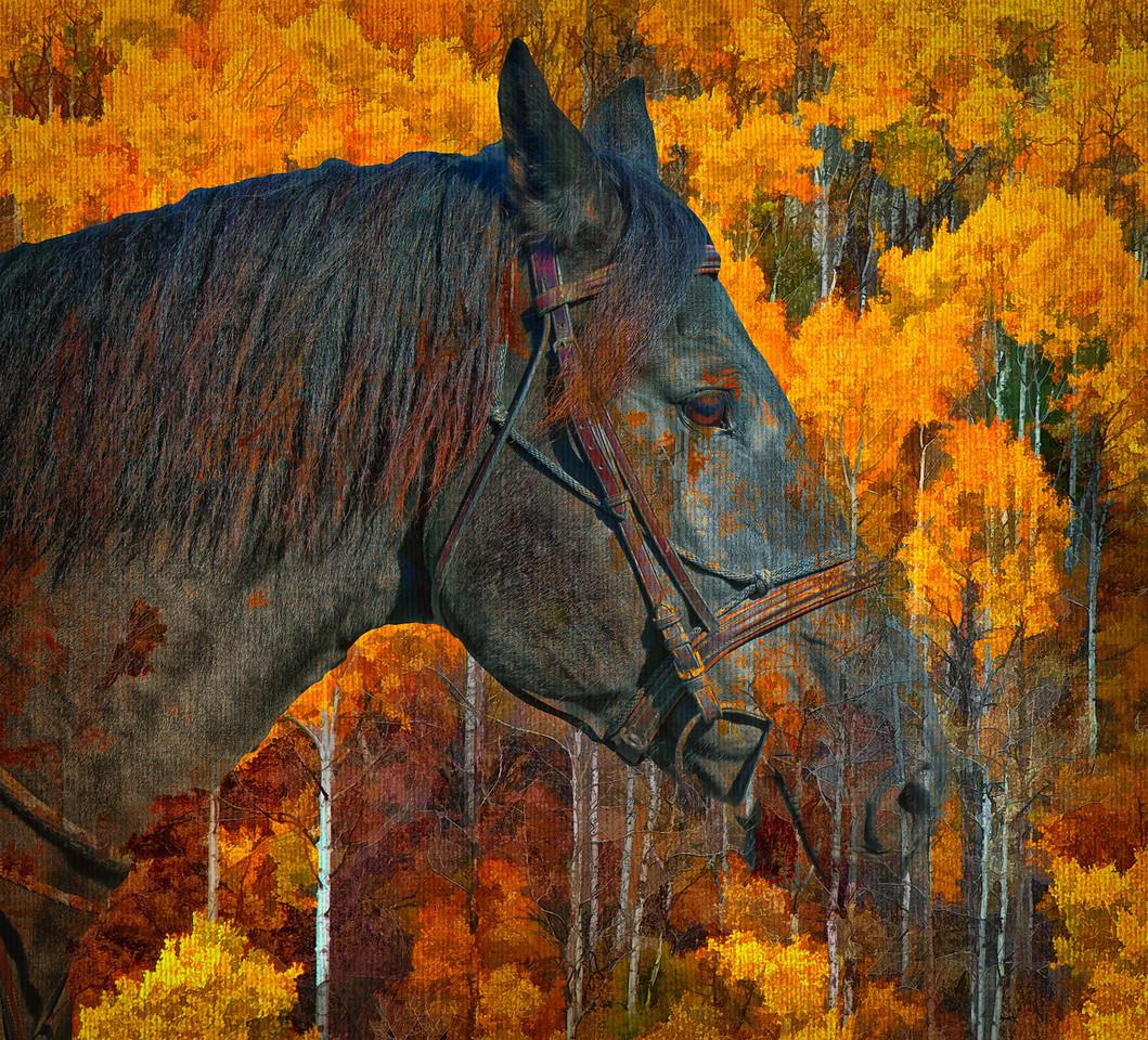 Beaver Creek 10-05-08 011 - Edit-2 - Edit-7 - Edit - Edit-2