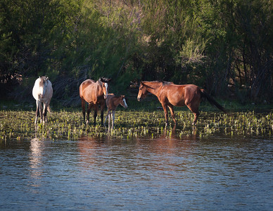 Mama horse and her foal cool off while others stand guard.