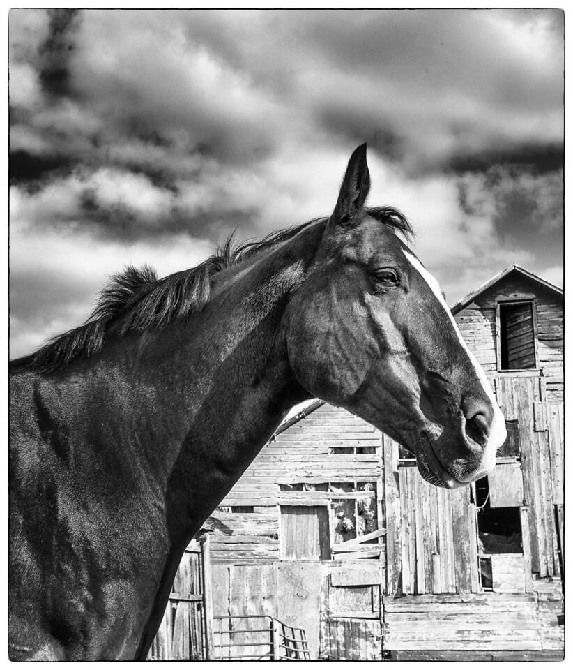 Horse Coaster Farm  09 22 12  012-2