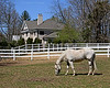 Horse in front of beautiful mansion at Nassau Equestrian Center.