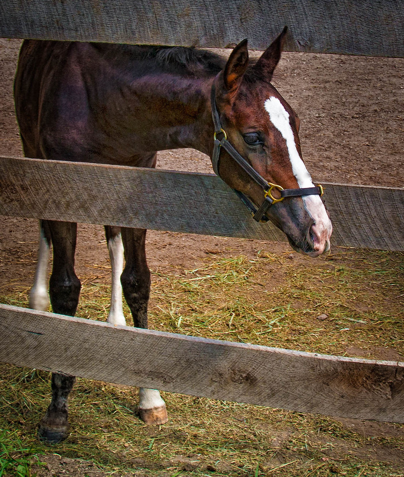 The Foal