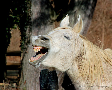 Goofy Horse in Muttontown Preserve.