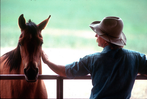 Whisper #3 16x24 Printed /framed $500.  Animal trainer Sand Reed Steamboat, Colorado