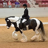 Dressage on the First Coast at Jacksonville Equestrian Center