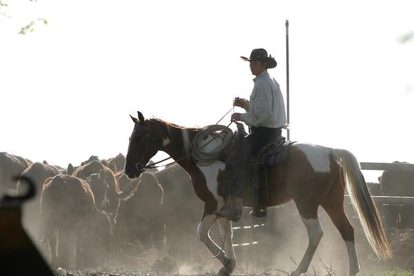 horses-1150
