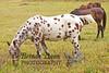 10-12-2011-Horses-0911