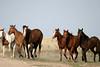 horses-1271