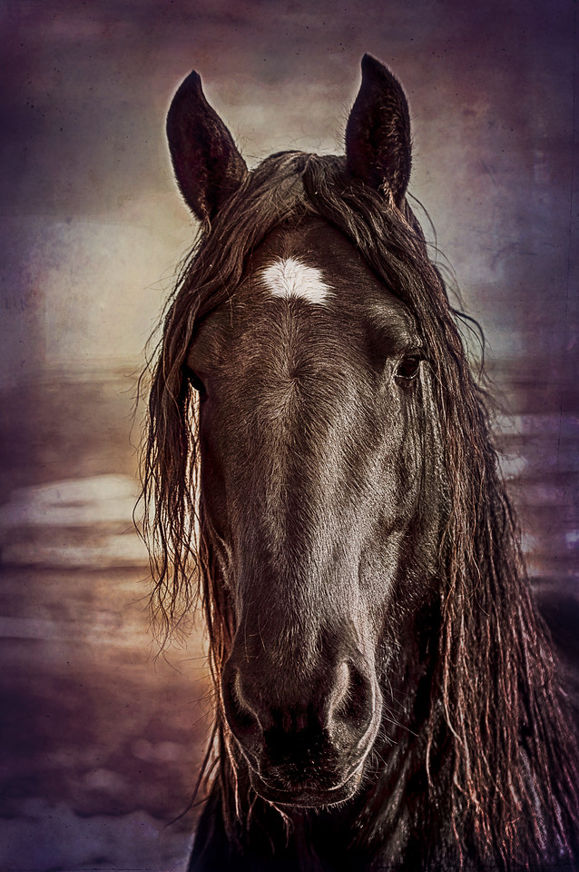 Percheron in Purple