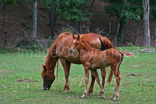Colt and its mama - 5/5/13