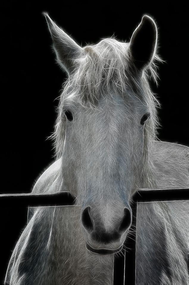 Horses Coester Farm  05 31 11  002-2