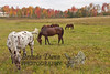 10-12-2011-Horses-0913