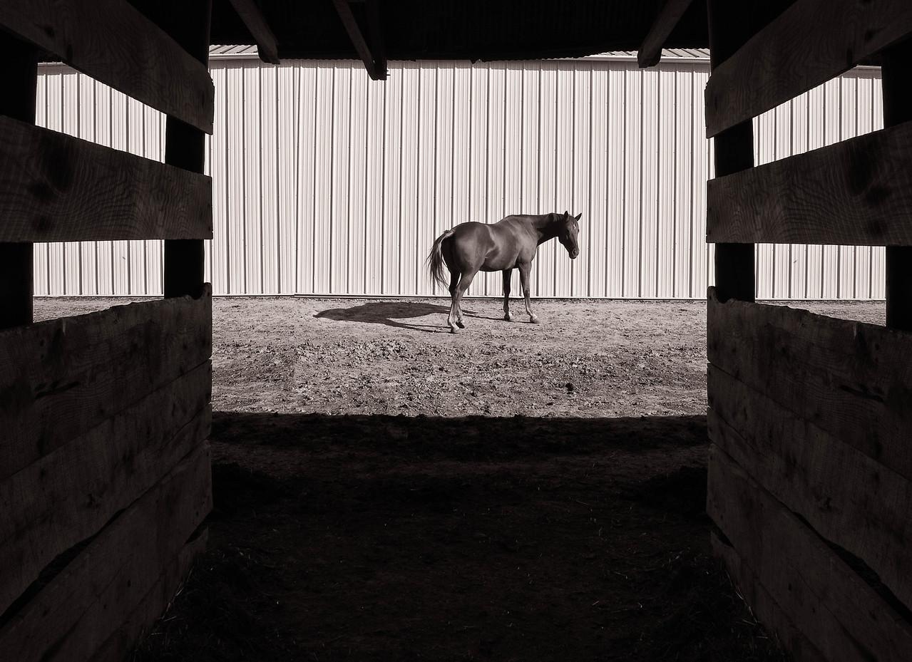 Horse Barn  10 02 11  009