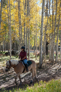 Horse with rider in Aspen trees.