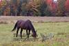 10-12-2011-Horses-0939