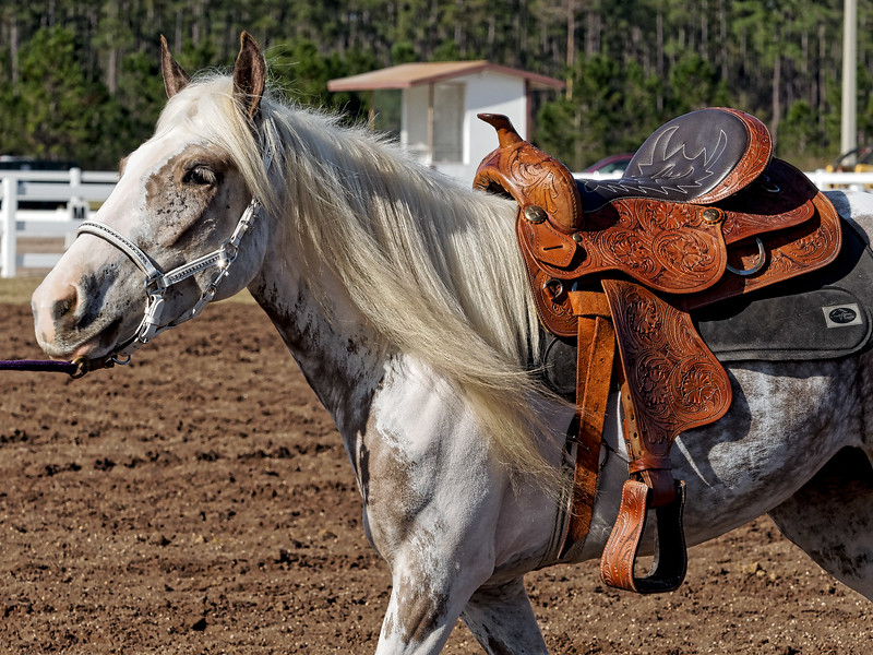 Horse and Saddle at Feathred Horse Classic