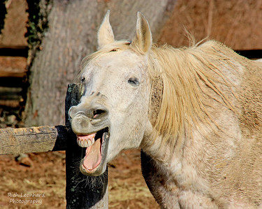 Laughing Horse in Muttontown Preserve.