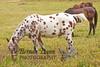 10-12-2011-Horses-0911-2