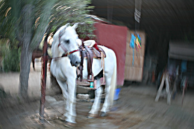 White horse in camera spin effect