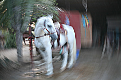 White Horse 2  in camera spin effect