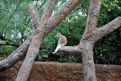 Houston Zoo 2012