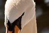 Swan 55x39 Black