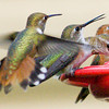 Hummingbirds<br /> Pleasanton, NM