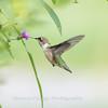 Hummingbirds 19 September 2017-8164