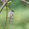 Hummingbirds 19 September 2017-8131