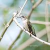 Hummingbirds 19 September 2017-8153