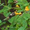 Hummingbirds 19 September 2017-8140