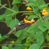 Hummingbirds 19 September 2017-8143