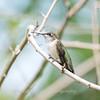 Hummingbirds 19 September 2017-8156
