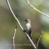 Hummingbirds 20 September 2017-8302
